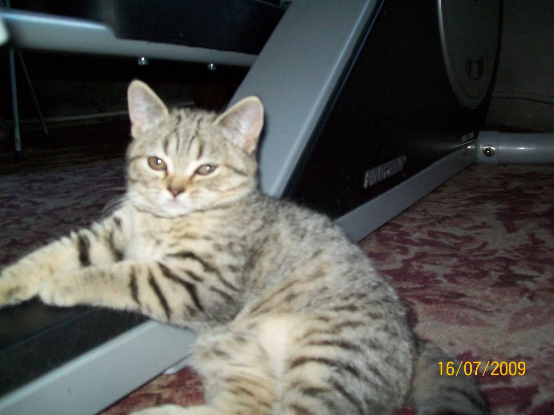 Играем в симулятор кошки приключение мульт игры про котят развлекательное видео для детей #пурумчата